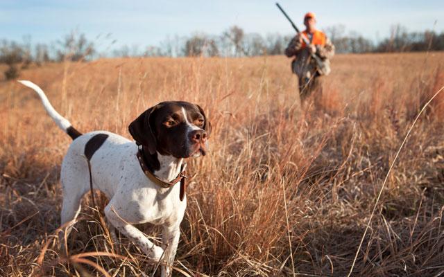 El seguro de caza obligatorio.