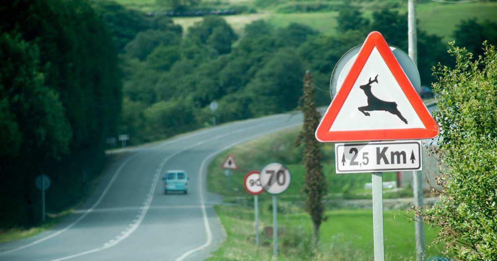 choques contra animales en el seguro de coche
