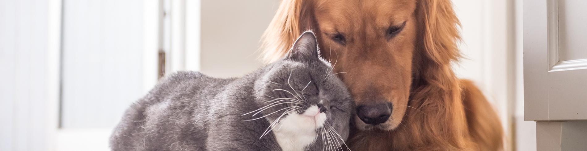 Servei animals de companyia