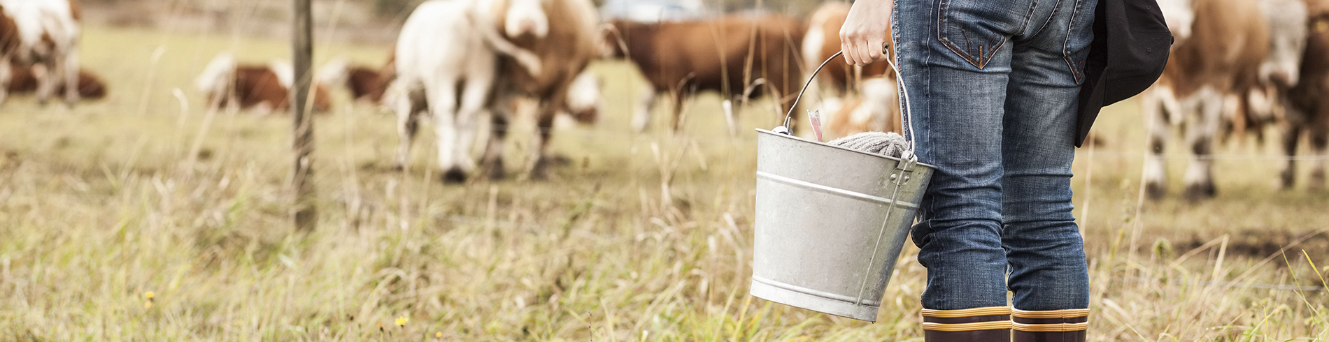 seguro para ganado vacuno